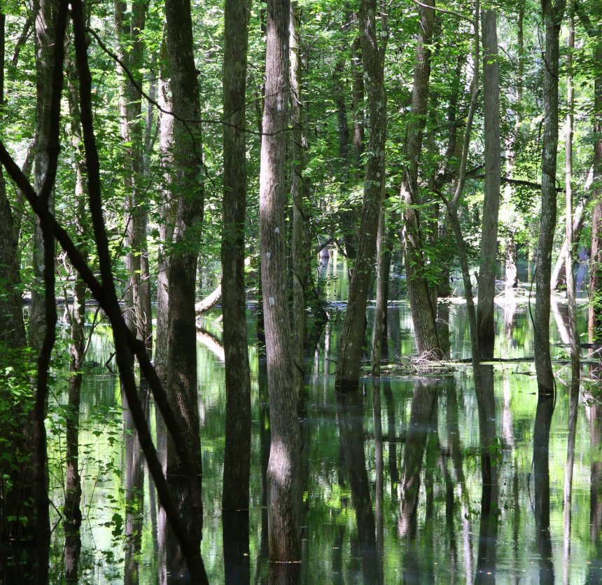 The quiet side of Florida: Ichetucknee river