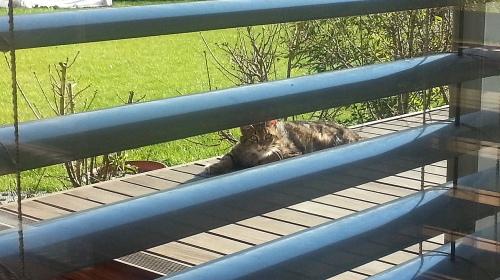 maček-obrezan