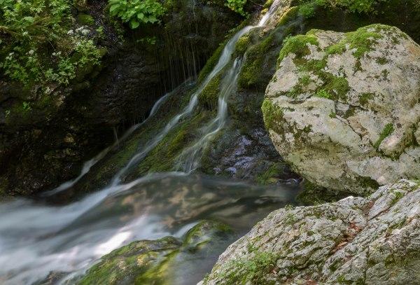 Sunik water grove