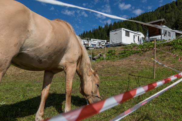 Grazing horse in Sauris