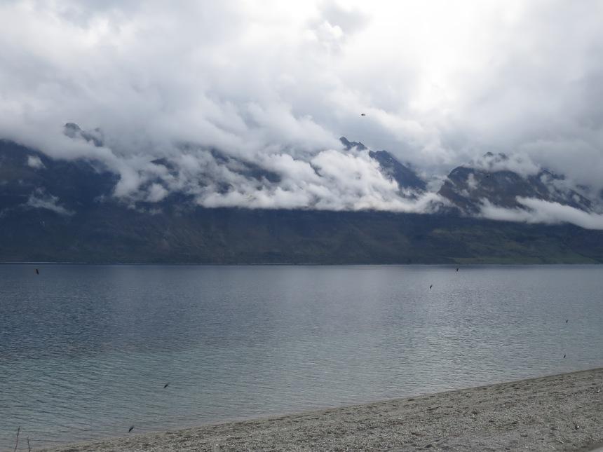 Sand flies waiting for some fresh blood, Lake Wakatipu