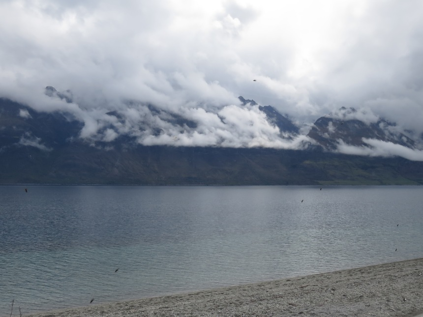 Sand flies waiting for some fresh blood, Lake Wakatipu