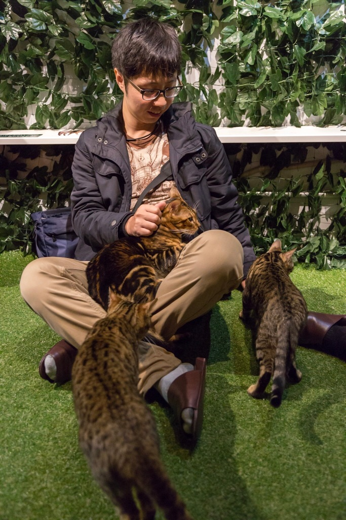 Kyoto cat cafe