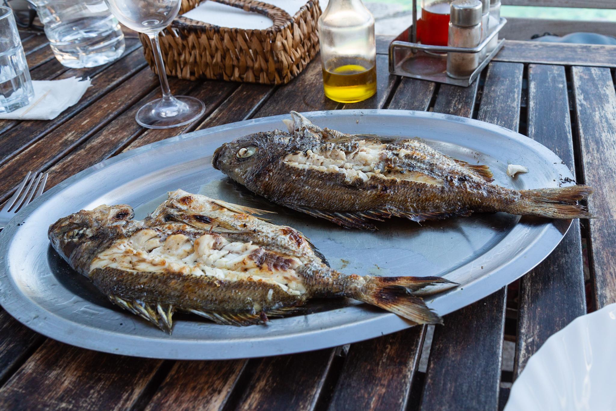 Grilled fish at Konoba Senko